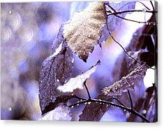 Silver Rain. The Garden Of Dreams Acrylic Print by Jenny Rainbow