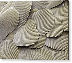 Silverfish Scales, Sem Acrylic Print by Power And Syred