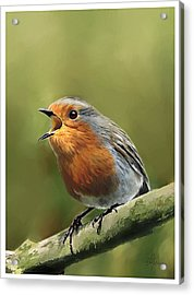 Sing Red Robin Sing Acrylic Print by Michael Greenaway