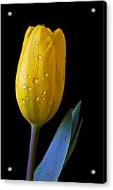 Single Yellow Tulip Acrylic Print by Garry Gay