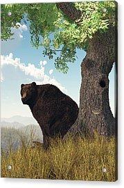 Sitting Bear Acrylic Print by Daniel Eskridge