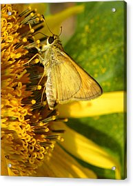 Skipper And Sunflower Acrylic Print by Sandi OReilly