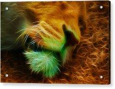 Sleeping Lion 2 Acrylic Print by Chris Thaxter