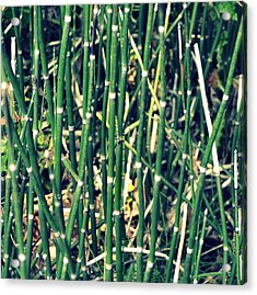 Snake Grass On The Beach Acrylic Print by Michelle Calkins