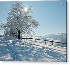 Snow Covered Tree With Sun Shining Through It Acrylic Print by © Peter Boehi