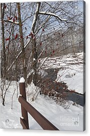 Snow Stream Acrylic Print by Meandering Photography