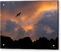 Soaring In The Midnight Sun Acrylic Print by Joe Bonita