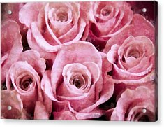 Soft Pink Roses Acrylic Print by Angelina Vick