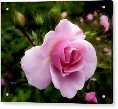 Softly Romantic Acrylic Print by Cindy Wright