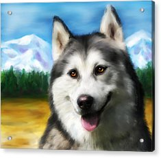 Smiling Siberian Husky  Painting Acrylic Print by Michelle Wrighton