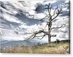 Solemn Tree Acrylic Print by Michael Clubb
