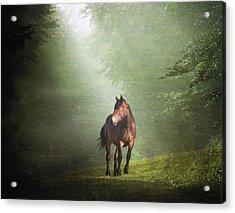 Solitary Horse Acrylic Print by Christiana Stawski