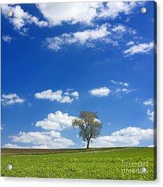 Solitary Tree In Green Meadow Acrylic Print by Bernard Jaubert