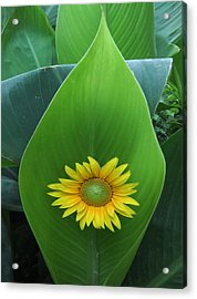 Something Simple Acrylic Print by Eric Kempson