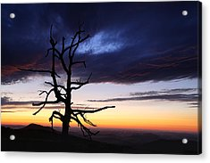 Something Wicked This Way Comes Acrylic Print by Metro DC Photography
