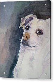 Sorry Acrylic Print by Victoria Glover