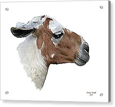 South American Goat Acrylic Print by Larry Small