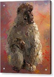 Space Monkey Acrylic Print by Yury Malkov