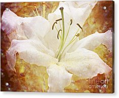 Sparkling Lily Acrylic Print by Clare Bambers