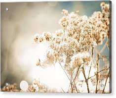 Sparkly Weeds Acrylic Print by Cheryl Baxter