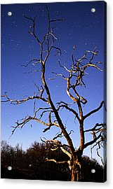 Spooky Tree Acrylic Print by Larry Ricker