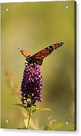 Spread Your Wings And Fly Acrylic Print by Angie Tirado