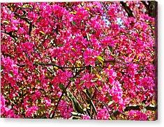 Spring Blossom Acrylic Print by Felix Zapata