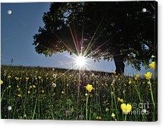 Spring Field Acrylic Print by Bruno Santoro