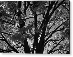 Spring Forth Acrylic Print by Lyle Hatch