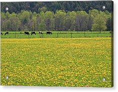 Spring Meadow Flowers Acrylic Print by John Stephens