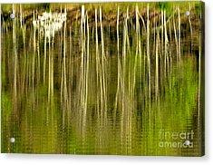 Spring Morning Reflections Acrylic Print by Thomas R Fletcher
