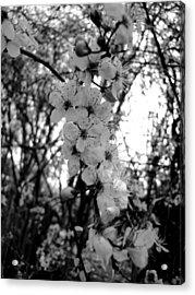 Spring Acrylic Print by Roberto Alamino