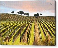 Spring Vineyard Acrylic Print by Sharon Foster