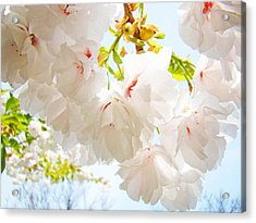 Spring White Pink Tree Flower Blossoms Acrylic Print by Baslee Troutman