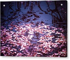 Spring's Embers - Cherry Blossom Petals On The Surface Of A Pond Acrylic Print by Vivienne Gucwa