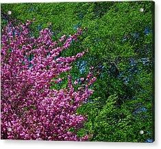 Springtime Acrylic Print by Lisa Phillips