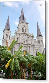St Louis Cathedral Rising Above Palms Jackson Square French Quarter New Orleans Print  Acrylic Print by Shawn O'Brien