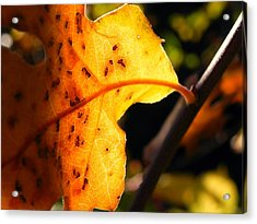 Stained Glass Of Autumn Acrylic Print by Leah Moore