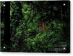 Stanley Park Trees 3 Acrylic Print by Terry Elniski