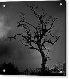 Stormy Tree Acrylic Print by Kevin Barske