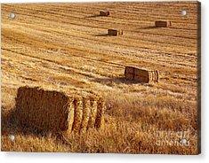 Straw Field Acrylic Print by Carlos Caetano