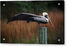 Stretch It Out Acrylic Print by Paulette Thomas