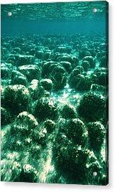 Stromatolites Acrylic Print by Peter Scoones