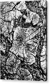 Stumped Acrylic Print by Mike McGlothlen