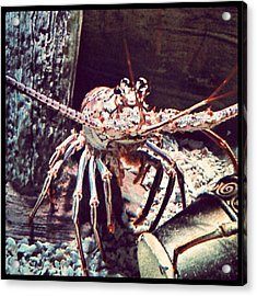 Suddenly, I Want Seafood.... #lobster Acrylic Print by Kel Hill