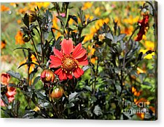 Summer Blossom Acrylic Print by Theresa Willingham