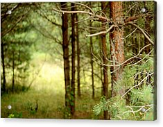 Summer Forest. Pine Trees Acrylic Print by Jenny Rainbow