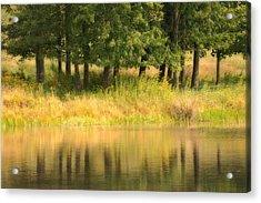 Summer Reflections Acrylic Print by Karol Livote