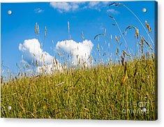 Summer Serenity Acrylic Print by Thomas R Fletcher