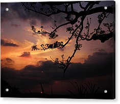 Sun Caught By Branches  Acrylic Print by Rosvin Des Bouillons